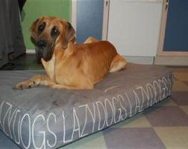 LAZY DOG -50% først til mølle