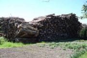 Træ/ træflis