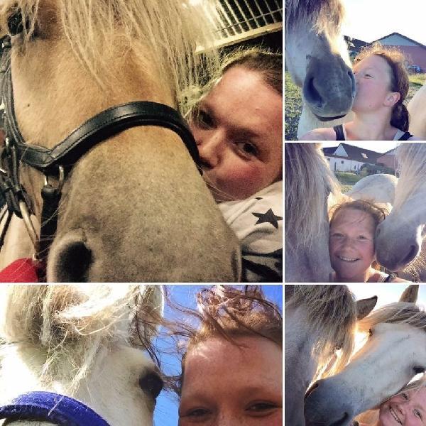 Stald søges til leje - Danmark - Stald søges til leje nær Skive Jeg vil prøve i god tid og se om jeg kan finde en stald at leje mig ind i. Jeg har tre fjordheste, hvor af de to af dem vil være ifolet, så der vil være 5 heste i 2018. Jeg får først hestene hjem tidligst m - Danmark
