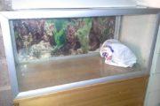 Akvarium Aqua stabil, 128 l