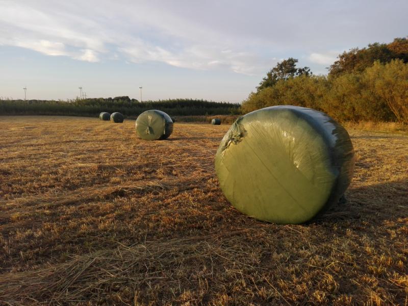 Wrap hø - Danmark - Wrap 1. slæt rundballer sælges. 125cm. godt hø. presset 19/7. 225kr pr stk. ved min. 10 stk. 200kr pr stk. - Danmark