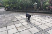 Fundet kat