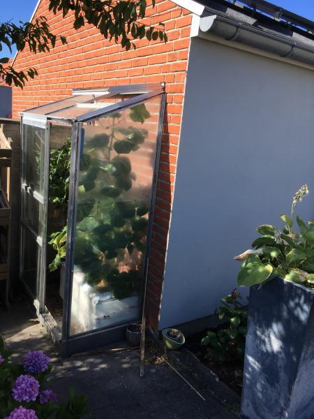 Væg Drivhus - Bredgade 10 Glyngøre - Væg drivhus sælges, brede 125 cm, dybde 65 cm, højde 175 cm. Med skydedør og tagvindue. Du skal selv pille det ned. Ny pris : 1825 kr. - Bredgade 10 Glyngøre