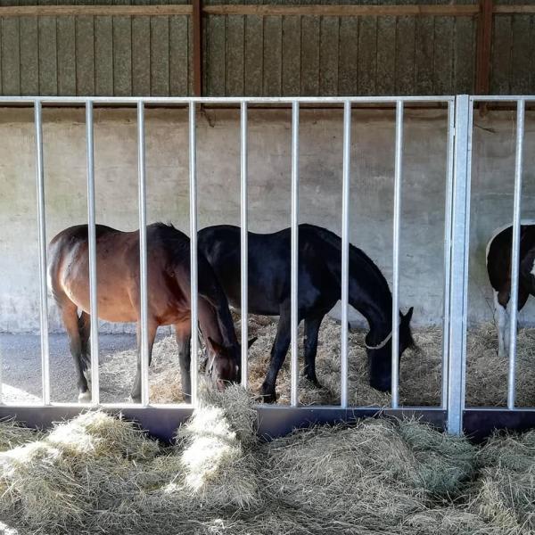 Opstaldning af hest