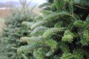 flotte juletræer