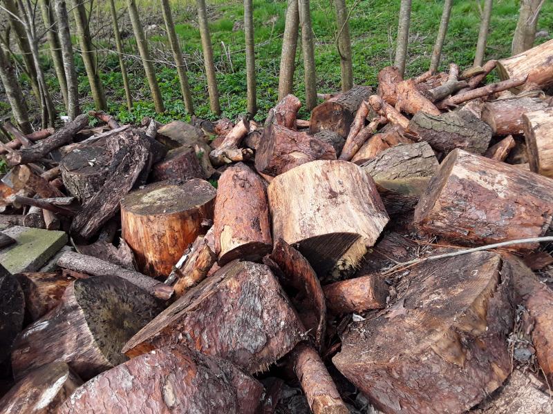 Træ - Yttrupvej 5 - Træ: Det er blandet træ f.eks gran der ca: 10 rummeter - Yttrupvej 5