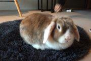 Kaninbur og kanin