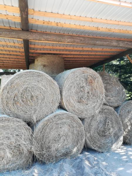 Hø i rundballer - Herningvej - Hø i rundballer sælges fra 2019 god kvalitet Ca 300 kg pr balle - Herningvej
