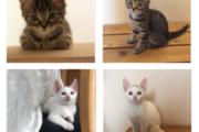 Søde kattekillinger