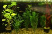 Fisk og planter