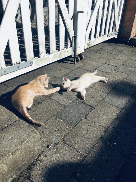 Søde killinger