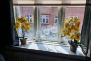 Blomster fra hilmars