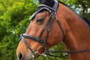 Hest udlånes