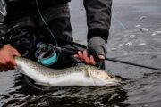 Danmarks vildeste lystfiskerdestination
