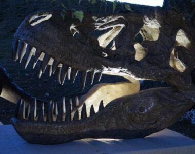 """Efterårsferie med """"nat på museet"""", fossiljagt og stenmaling"""