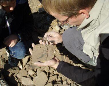 Fossiljagt