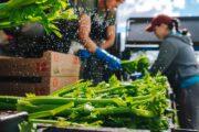Danmarks største mad-festival lægger vejen forbi Skiveegnen til maj