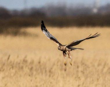 Fugletur ved Flyndersø